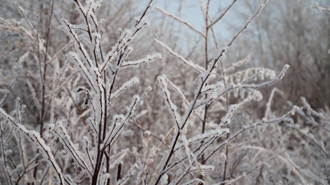 snow covered plants Live Action