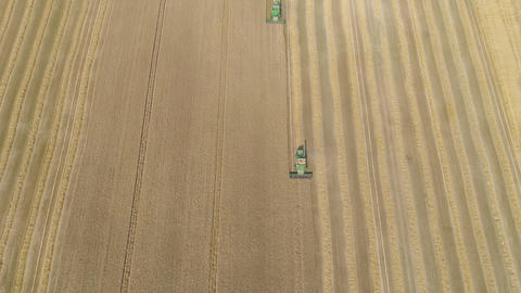 Combine harvester on wheat field Live Action