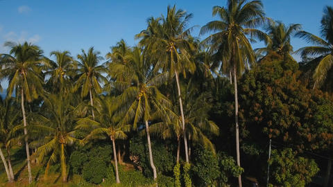 Sea landscape with the sea and palm trees.Aerial view:Camiguin island Live Action