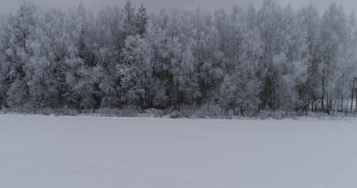 Winter landscape with forest, field. Winter landscape Live Action