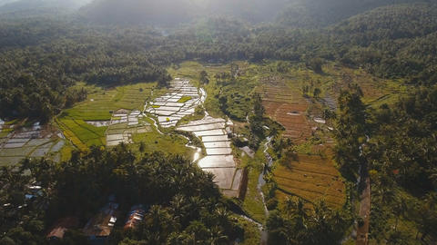 Aerial view of a rice field. Philippines Footage