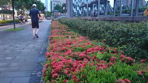 sport,runner,flower,road,city,park Live影片