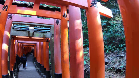 Beautiful long torii Live Action