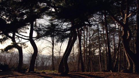 樹木 Footage