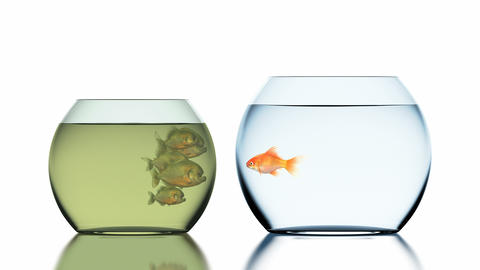 Goldfish Escapes from the Muddy Aquarium with Piranhas Animation