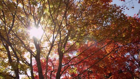 Valley nagano yokoyakeikoku V1-0091 Footage