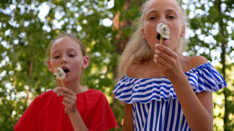 Two teenager girls blowing to white dandelion in summer park. Girls blowing Live Action