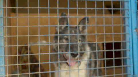 Sad dog in a cage at a animal shelter Live Action