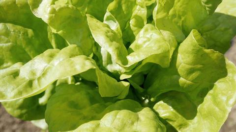 Green salad Footage