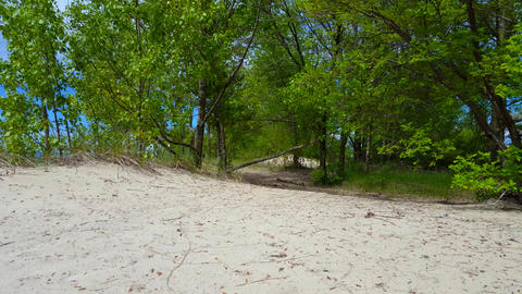 *Free Version* Beautiful Beach Shore With Lush Green Trees During Summer Day. Sand Shoreline With Live Action