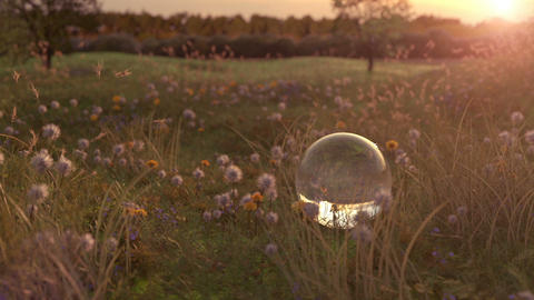 flower meadow and glass ball in the evening sunshine, Stock Animation