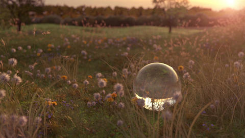 flower meadow and glass ball in the evening sunshine Animation