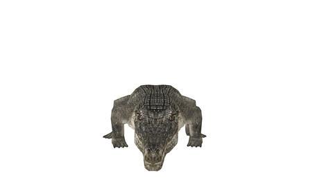 crocodile Animation