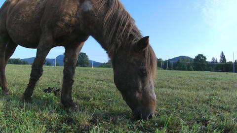 Horse grazing. Brown horse on farm pasture. Detail of brown horse feedig on pasture Live Action