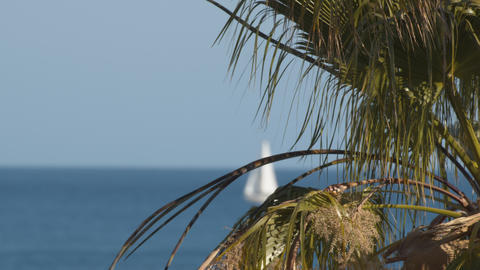 A closeup of a palm branch against a bright sea view Footage