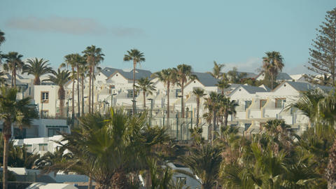 Houses and palms in Lanzarote, Canary Islands Footage