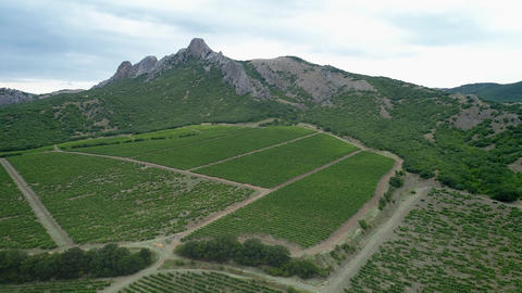 Italian Countryside Beautiful Farms and Vineyards Beautiful Aerial View Footage