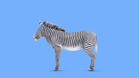zebra Animation