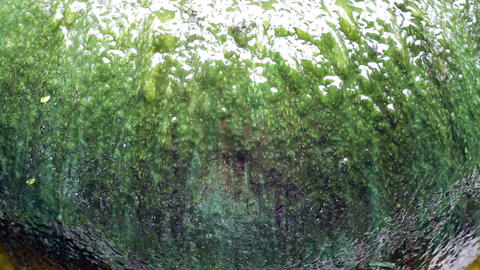 Giant water jar fountain green algae surface closeup Footage