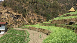 Rice field terraces mountain village HD video. Agriculture farming Himalayas Footage