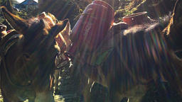 Nepal Himalayas standing laden mules HD video Footage