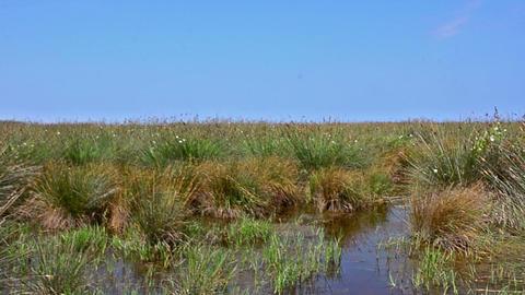Wetlands in the Kizilirmak delta Black Sea Province of Turkey Footage