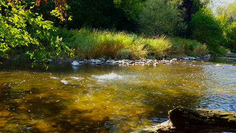 View of Rock Throw Into River Scaring Large Fish to Swim Away. Beautiful Scene of Splashing Stone Live Action
