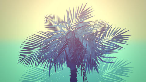 Closeup tropical palm trees, summer background Animation