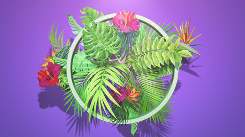 Closeup tropical flowers and leaf, summer background Videos animados