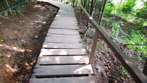 Descent down the wooden steps in the Carpathian forest Live Action