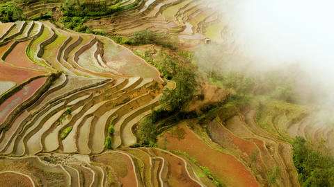 Aerial shot of the famous terraced rice fields of Yuanyang County China Live Action