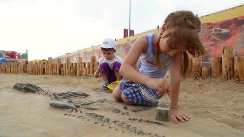 Archaeological excavation of dinosaur bones Footage