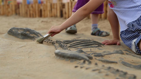 Archaeological excavation of dinosaur bones Footage