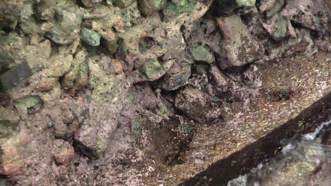 CRABS CRAWLING ON THE ROCKS Stock Video Footage