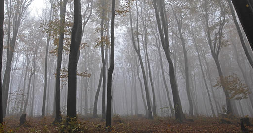 Mist in the forest and the road across the trees and forest Footage