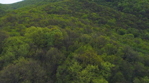 Green ecological forest to prevent global warming Live Action