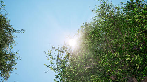 Sun in zenith shining brightly through green leaves 3d animation Footage