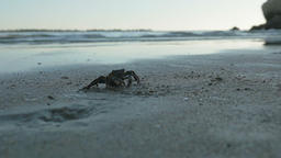 A small crab in sand, on the seashore Live Action