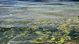 Water pollution at the sea Stock Video Footage