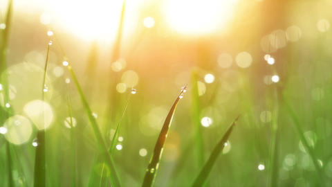 Dew Drops on Green Grass. Shot With Slider Stock Video Footage