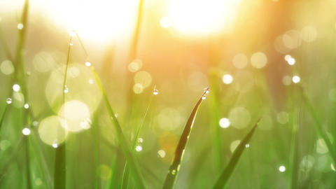 Dew Drops on Green Grass. Shot With Slider Footage