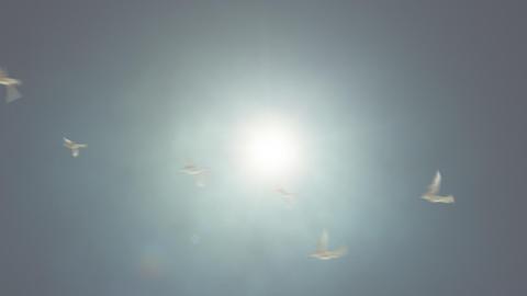 Birds Flying Against the Sun Loop Stock Video Footage