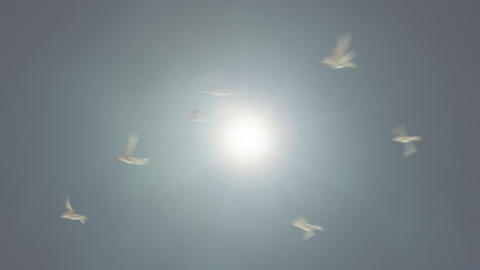 Birds Flying Against The Sun Loop stock footage