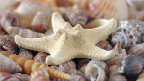 Starfish and Shells Stock Video Footage