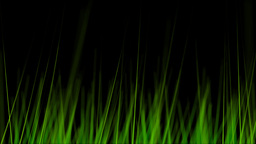 BG GRASS 004 24fps Stock Video Footage
