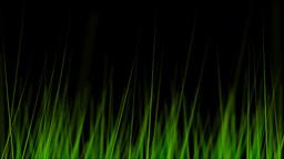 BG GRASS 004 30fps Stock Video Footage