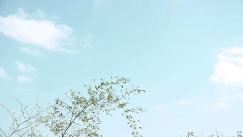 Bamboo grass and sky#1 笹の葉と空#1 Stock Video Footage
