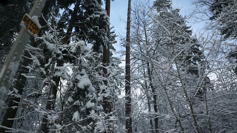 Winter Forest 06 stock footage