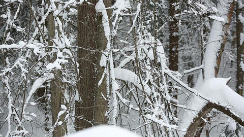 winter forest 20 Stock Video Footage