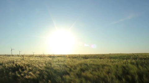 Fields of Barley Stock Video Footage
